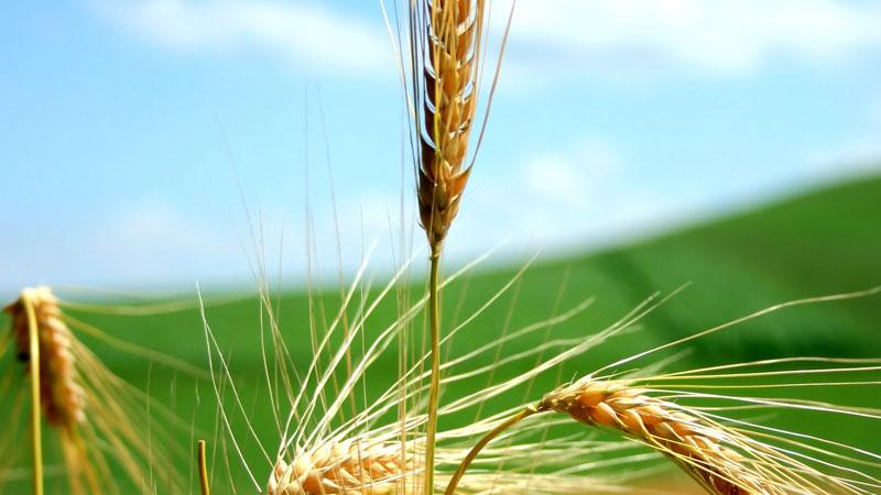 rivoluzione dell'agricoltura